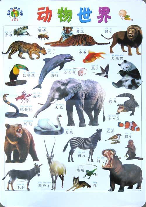 动物世界-王笑非-少儿