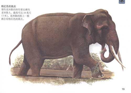 口袋图书馆:口袋图书馆/危险动物(全彩)