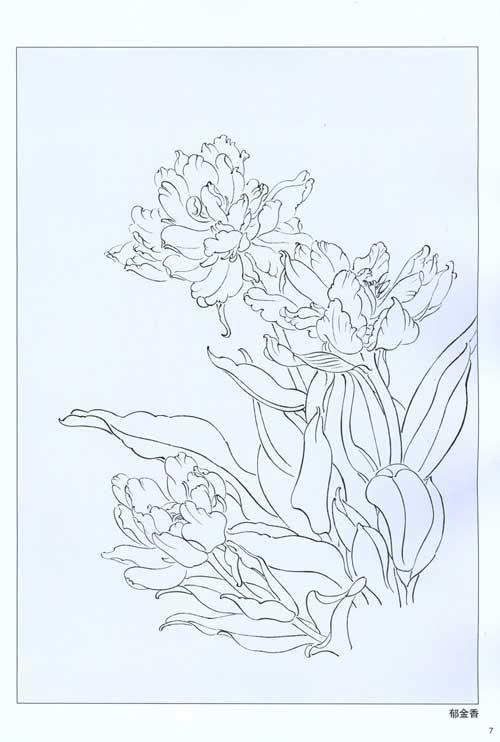 花卉白描画稿-张德泉 绘-技法教程-文轩网