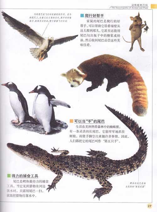 中国少年儿童/百科全书-动物植物百科