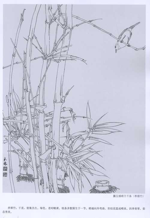 详细介绍了竹子的画法步骤